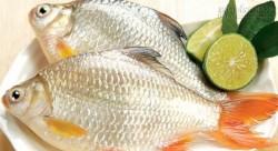 Mẹo giữ cá tươi lâu, nấu không tanh ai cũng nên biết
