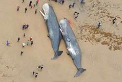 Giải phẫu cá voi đột tử trên biển và phát hiện bí mật động trời bên trong