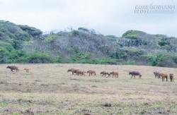 Kỳ bí, hoang sơ như Loango