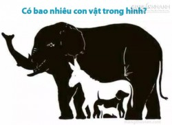 Có bao nhiêu con vật trong hình?