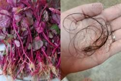 Gội đầu bằng thứ này trong vòng 1 tuần, tóc rụng hàng loạt cũng khỏi, mọc dày và mềm mượt hơn
