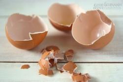 Bạn sẽ dừng việc vứt vỏ trứng vào thùng rác sau khi đọc bài này
