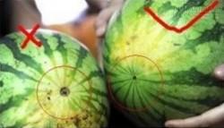 13 năm kinh nghiệm buôn trái cây của nhà vườn chỉ cho bạn cách chọn trái cây ngon!