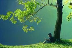 Hạt giống tâm hồn: Câu chuyện cậu bé dưới bóng cây