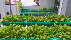 Những lưu ý giúp bạn trồng rau tại nhà vô cùng hiệu quả