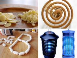 Để không bị muỗi đốt bằng 4 cách đơn giản tự làm tại nhà