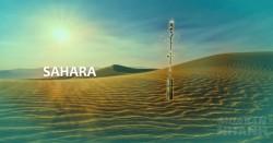 Câu chuyện cây sồi duy nhất tồn tại trên sa mạc Sahara và bài học sâu sắc về ý chí quật cường