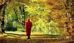 12 lời khuyên về cuộc sống từ thiền sư sẽ thay đổi cuộc đời bạn