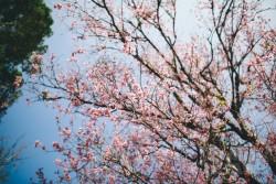 3 loài hoa đẹp khiến bạn chỉ muốn lạc trôi tới Đà Lạt ngay và luôn