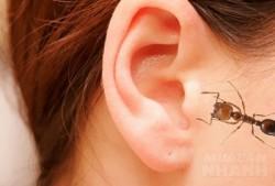 Mẹo xử lí khi côn trùng chui vào tai, đơn giản mà hiệu quả vô cùng- ai cũng nên biết