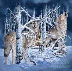Bạn là thánh soi nếu biết được tổng số con sói trong hình