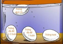 Chỉ 1 giây là biết chính xác quả trứng đã để bao lâu, mẹo hay mà ai cũng nên biết