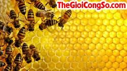 Cách nhận biết mật ong thật