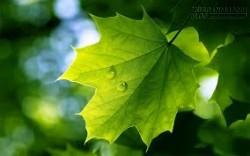 Câu chuyện cuộc sống - Hãy là một chiếc lá