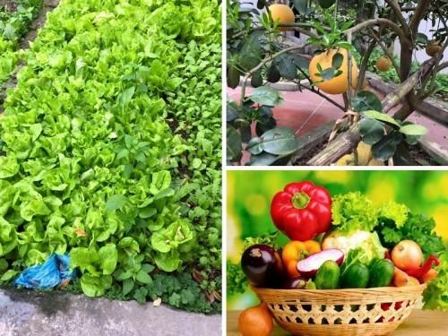 8 loại thực phẩm có thể gây nguy hiểm đến sức khỏe, bạn đã biết chưa?, 79052, Ms Hạnh Dung, Blog MuaBanNhanh, 24/02/2018 15:46:19