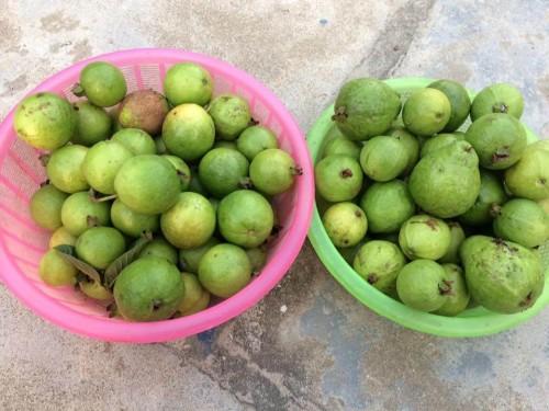 Mách bạn 5 cách nhận biết rau bị nhiễm hóa chất, 79118, Ms Hạnh Dung, Blog MuaBanNhanh, 27/02/2018 17:54:17