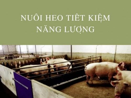 Nuôi heo tiết kiệm năng lượng, 78066, Cty Tnhh Dinh Dưỡng Lửa Việt, Blog MuaBanNhanh, 28/12/2017 12:19:09