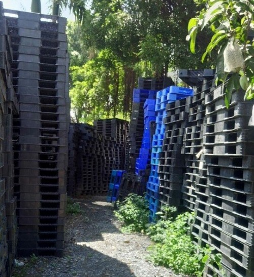Báo giá pallet nhựa, 77121, Pallet Nhựa Cũ Giá Rẻ, Blog MuaBanNhanh, 28/12/2017 12:02:58