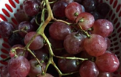 12 loại trái cây cực tốt cho sức khỏe phụ nữ, 79220, Ms. Bích Ngọc, Blog MuaBanNhanh, 03/03/2018 11:18:44
