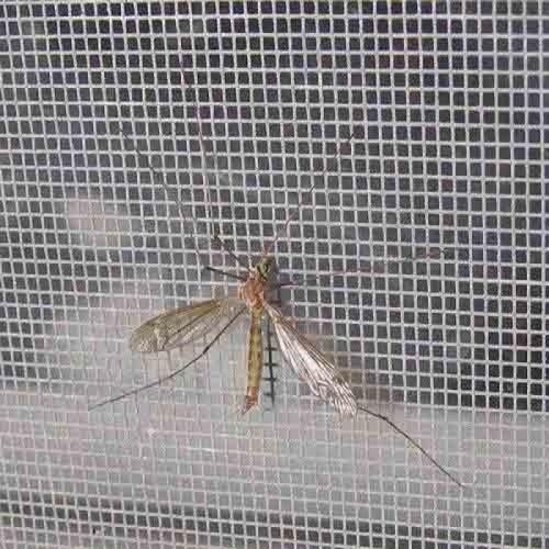 Thi công cửa lưới chống muỗi, 79628, Anh Trung, Blog MuaBanNhanh, 19/03/2018 10:49:46