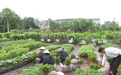 Giới thiệu công ty cây xanh Gia Nguyễn, 81881, Cây Xanh Gia Nguyễn, Blog MuaBanNhanh, 05/06/2018 12:16:19