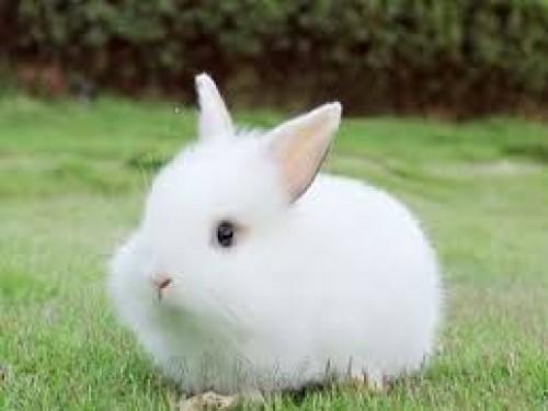 Quy trình dùng thuốc trong chăn nuôi thỏ, 77830, Mr Thắng, Blog MuaBanNhanh, 28/12/2017 12:10:46