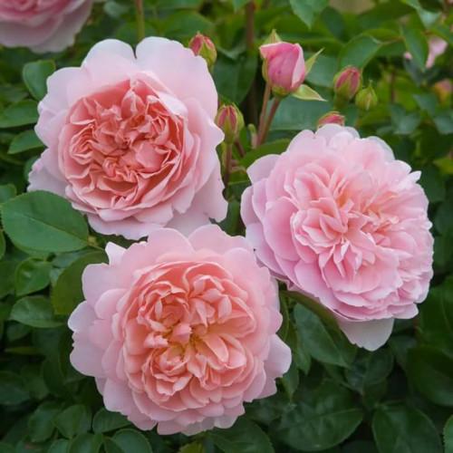 Shop hoa tươi Tphcm - Shop hoa tươi The Emotion Flower, 83117, Lê Thị Thanh Thuý, Blog MuaBanNhanh, 19/07/2018 09:01:04