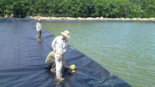 Xử lý nước ao nuôi tôm như thế nào để đạt hiệu quả tốt nhất?, 85153, Đinh Hùng, Blog MuaBanNhanh, 06/09/2018 08:41:19