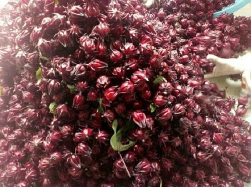 Công dụng tuyệt vời của hoa atiso đỏ đối với sức khỏe, 85304, Nguyễn Ngọc Diệp, Blog MuaBanNhanh, 11/09/2018 13:59:39