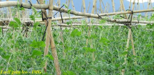 Lưới nông nghiệp - Lưới cước trắng leo giàn cho cây, 85381, Minh Ngọc, Blog MuaBanNhanh, 12/09/2018 14:38:11