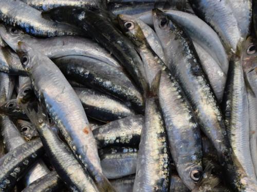 Những lưu ý khi chọn mua, sơ chế và bảo quản khô cá, 85379, Trần Thanh Phương, Blog MuaBanNhanh, 12/09/2018 16:26:33