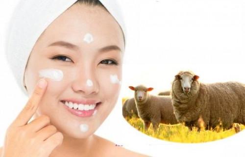 Nhau thai cừu có tác dụng gì?, 86444, Ms Huệ, Blog MuaBanNhanh, 18/10/2018 17:11:14