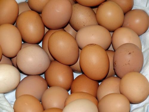 Ăn trứng gà nhiều hay ít sẽ liên quan đến tỉ lệ tử vong ở nam và nữ, 86552, Nguyễn Ngọc Diệp, Blog MuaBanNhanh, 23/10/2018 11:02:12