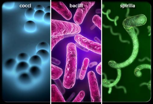 Bệnh nhiễm trùng do vi khuẩn và virus là bệnh gì ?, 86711, Mediphar Usa, Blog MuaBanNhanh, 26/10/2018 16:48:07