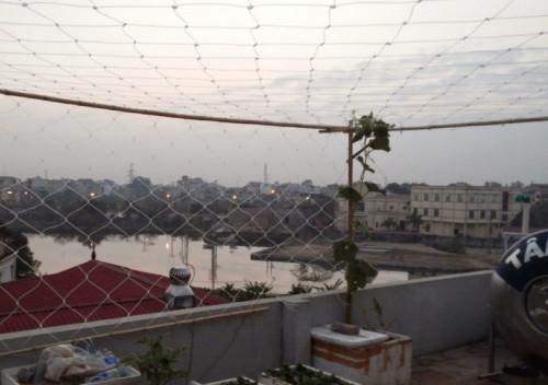 Lưới leo giàn cho cây phục vụ ngành nông nghiệp, 86738, Minh Ngọc, Blog MuaBanNhanh, 27/10/2018 16:40:25