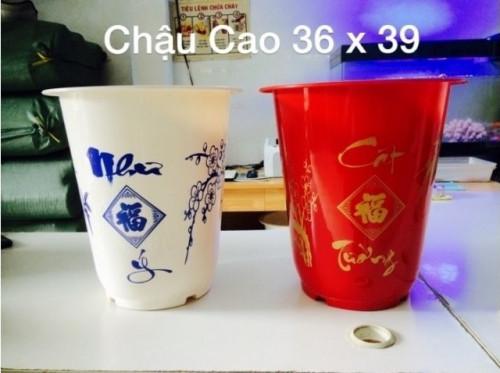 Lợi ích khi mua chậu nhựa trồng cây, 86816, Hứa Minh Châu, Blog MuaBanNhanh, 30/10/2018 15:38:45