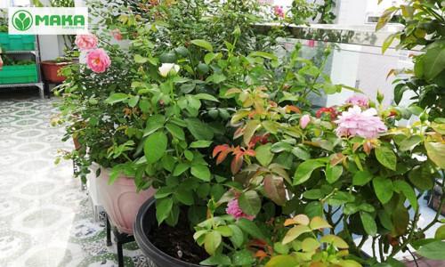 Công ty Maka Việt Nam – Cung cấp giải pháp tưới tự động cho khu vườn, 87396, 0982804778, Blog MuaBanNhanh, 15/11/2018 11:56:54