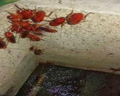 Dịch vụ rửa bể nước ngầm tại Hà Nội, 88860, Trần Văn Thành, Blog MuaBanNhanh, 09/01/2019 12:01:19