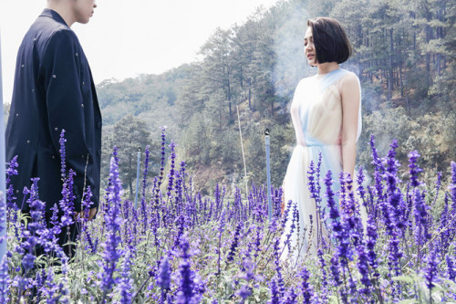 Nghệ sĩ việt cũng dành ưu ái cho Đà Lạt, 89300, Hoavnsup, Blog MuaBanNhanh, 28/01/2019 15:05:36