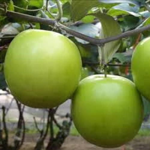 Đặc điểm cây Táo Thái, 91338, Giống Cây Và Hoa, Blog MuaBanNhanh, 22/07/2019 08:43:22
