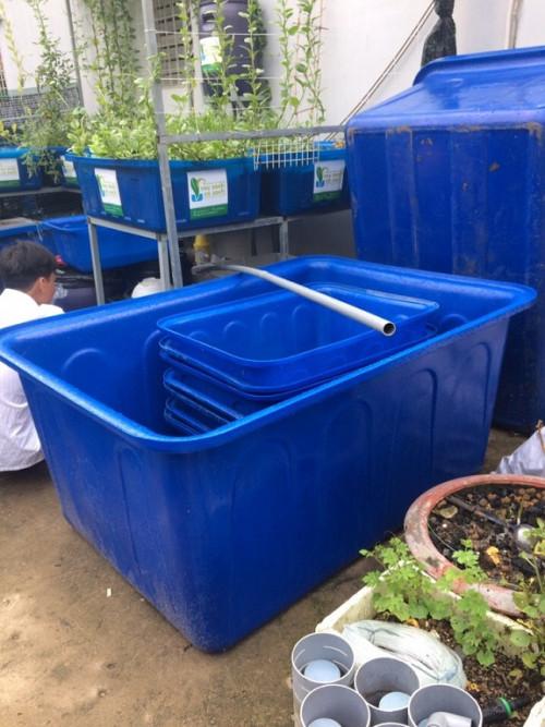 Bể xi măng hay thùng nhựa dung tích lớn, đâu là giải pháp tốt nhất để nuôi cá?, 92065, Nhựa Hòa An, Blog MuaBanNhanh, 30/08/2019 15:22:32