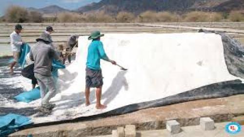 Màng chống thấm HDPE lót ruộng muối - Bạt chống thấm HDPE Phong Kiều, 94136, 0966515159, Blog MuaBanNhanh, 12/03/2020 15:54:15