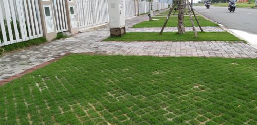 Nhà Vườn Đức Tiến Phát Thi công trồng cỏ cho Khu dân cư Khang Điền Bình Chánh, 94188, Cỏ Nhung Nhật - Cỏ Giá Rẻ, Blog MuaBanNhanh, 06/03/2020 13:53:42