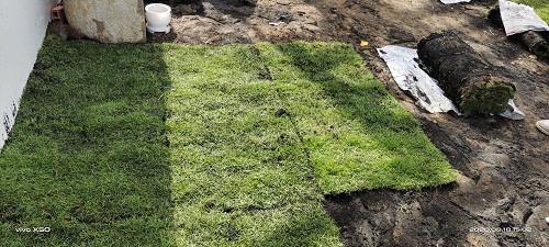 Nhà Vườn Đức Tiến Phát thi công trồng cỏ nhung nhật sân vườn 250m2 tại Đức Hòa Long An, 95669, Cỏ Nhung Nhật - Cỏ Giá Rẻ, Blog MuaBanNhanh, 03/02/2021 09:54:30