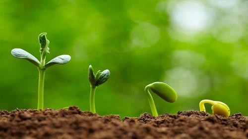 Cách ươm hạt giổi này đảm bảo nảy mầm 100%, 95054, Trung Tâm Giống Cây Trồng Học Viện Nông Nghiệp, Blog MuaBanNhanh, 29/10/2020 14:56:52