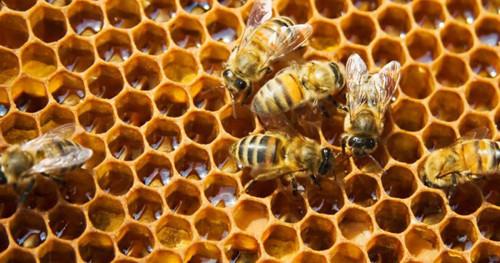 Ý nghĩa logo Bee Light - thương hiệu đèn trang trí Bee light®, 95260, 0834417579, Blog MuaBanNhanh, 29/10/2020 15:45:53