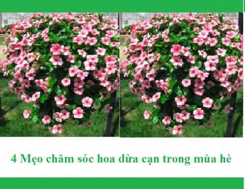 4 Mẹo chăm sóc hoa dừa cạn trong mùa hè, 80374, Trang Minh Gardens, Blog MuaBanNhanh, 17/04/2018 10:42:47