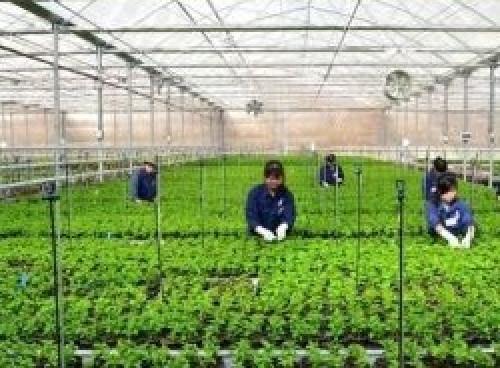 Nhà lưới trồng rau sạch, 81962, Lưới Nhựa Lưới Dù Img, Blog MuaBanNhanh, 27/06/2018 09:38:44