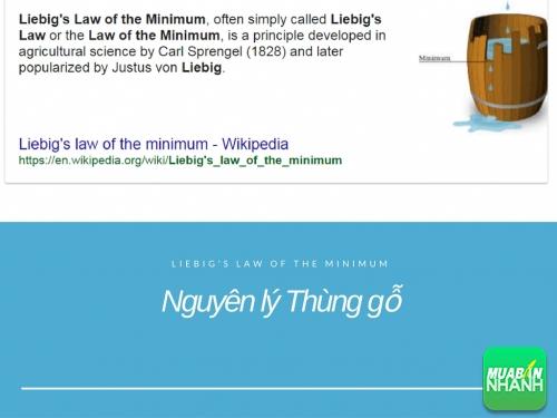 Nguyên lý Thùng gỗ (Liebig's Law of the Minimum) - Nguyên lý kinh doanh kinh điển mà dân kinh doanh phải hiểu, 78093, Huyền Nguyễn, Blog MuaBanNhanh, 28/12/2017 12:19:49
