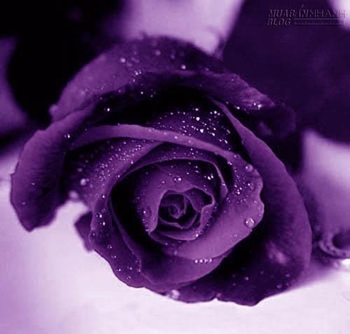 Nắm một bàn tay đã buông, 34129, Bích Huyền, Blog MuaBanNhanh, 13/04/2015 18:42:42